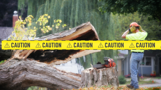 Dangers of a DIY tree removal.